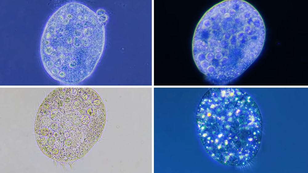 Microbes Don't Actually Look Like Anything