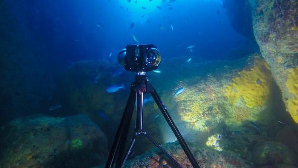 boxfish360_underwater